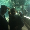 visita all'Underwater World (10)