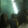 visita all'Underwater World (7)